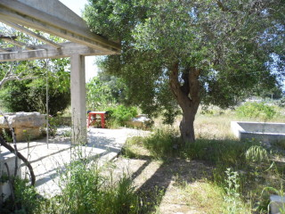 Old house of 90 sqm on an olive grove of 3500 sqm