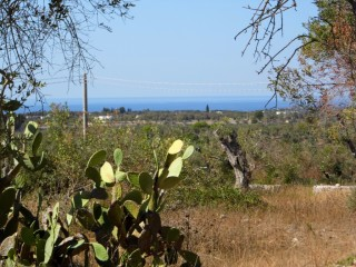 Land with olive trees, sea view, with ancient stone house and new house project with SWIMMING POOL