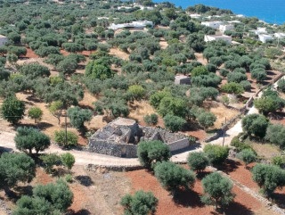 Ancient building to be restored, with a garden of ancient olive trees