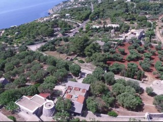 Stone villa, sea view, on the Adriatic sea, surrounded by olive trees