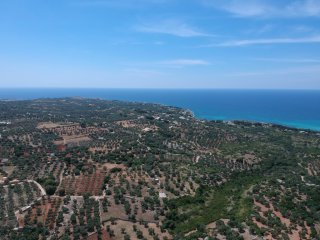 Land with olive and oak trees, sea view, with Villa project