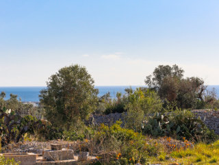 Terreno edificabile, vista mare, con Progetto Villa e Fabbricato Rurale