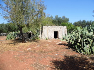 Land with olive trees of 17,000 square meters, building, 1 or 2 Villas